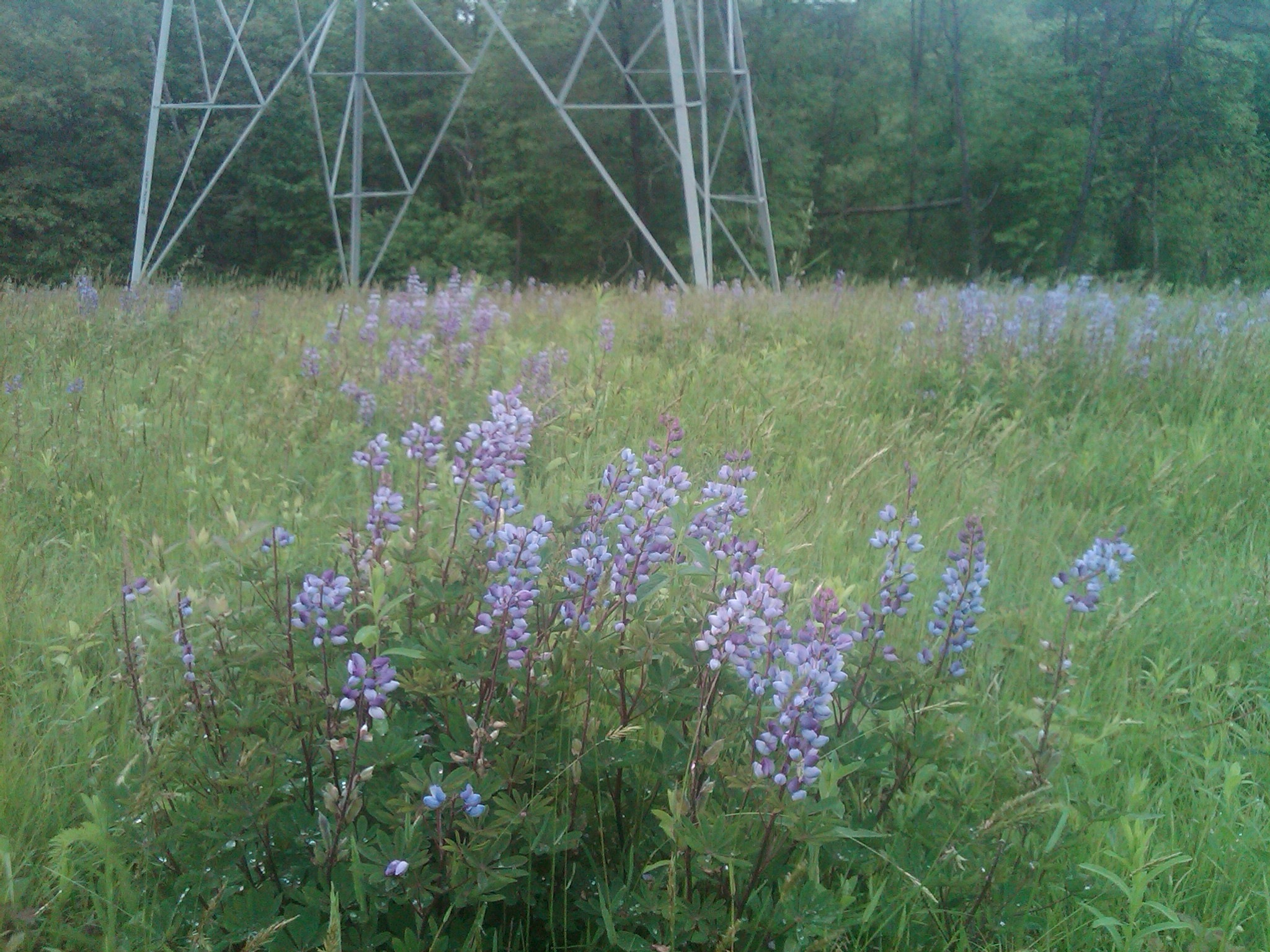 Thunder Bay Field Naturalists presents Susan Meads, Integrated Vegetation Management Expert