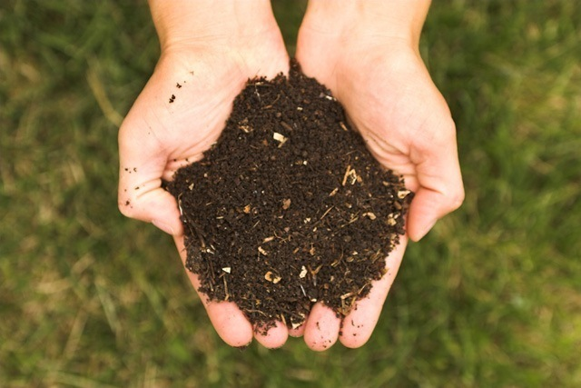 Free Compost for Your Lawn and Flower Garden