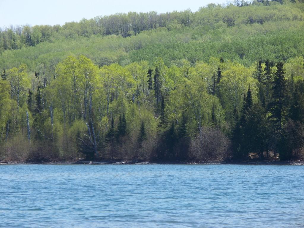 Beautiful green at Sawyer Bay