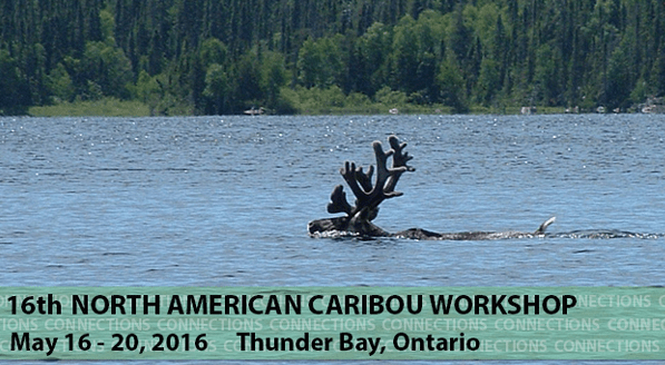 The North American Caribou Workshop—Connecting Caribou with our Community