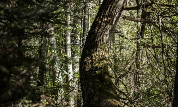 What COVID-19 Has Taught Us About the Value of Nature